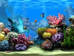 Living Marine Aquarium 2 Screensaver